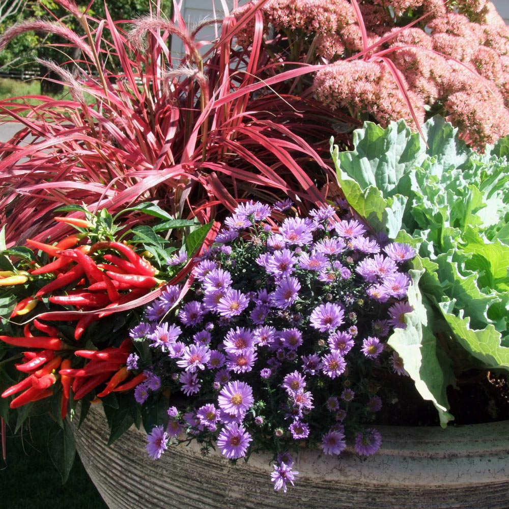 LaurelRock's Garden & Property Manager, Colleen Kinyon, shares her favorite trends of the season!